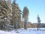 Rold Skov